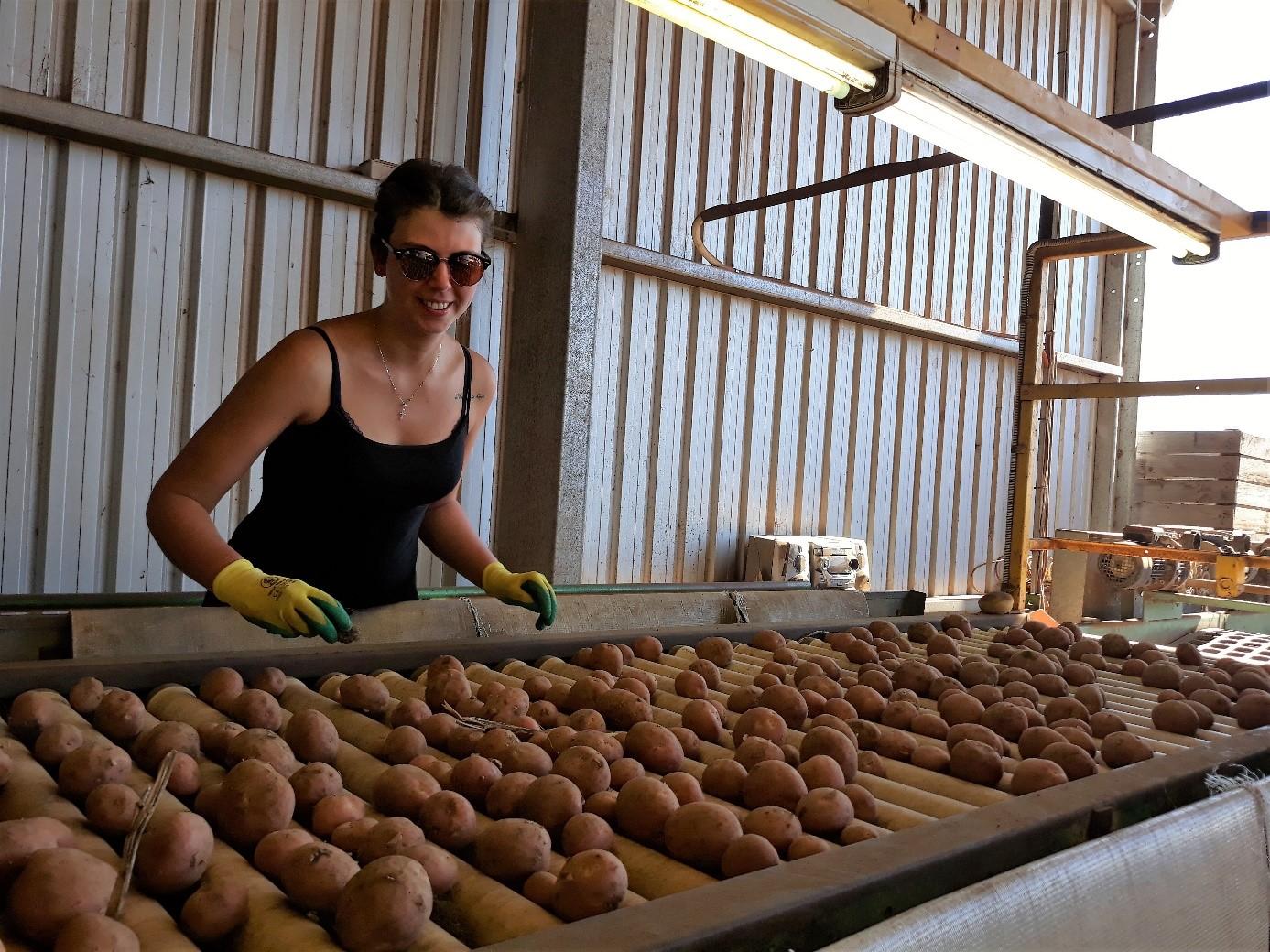 Travail en Australie ferme de pommes de terre