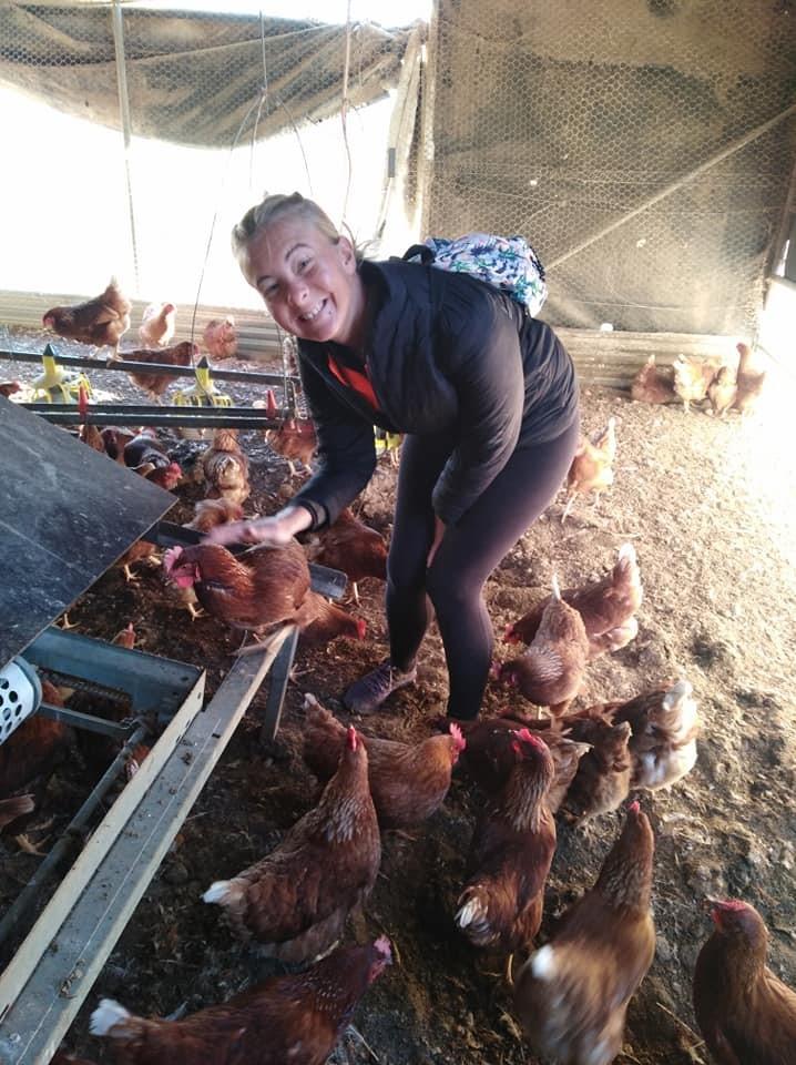 Travail en Australie ferme de poules